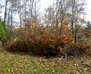 Bergen County Tree Service