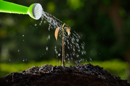 The Benefits of Planting a new tree