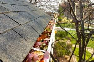 Fall Maintenance