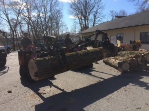Tree Removal Company in Caldwell, NJ