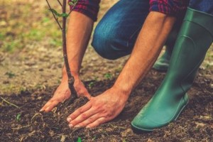 Planting Trees in the Summer