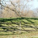 Why Do Tree Limbs Fall? Could One of Yours Be Next?