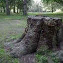 Don't Get Stuck with Stump Issues – Remove It Today!