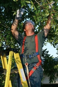 Tree Care Operator