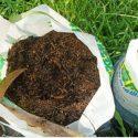 Should You Fertilize Trees?