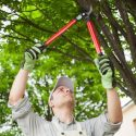 How to Become a Good Tree Pruner