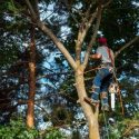 Have Your Trees Professionally Trimmed This Spring