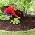 Keep These Things in Mind When Mulching Around Your Trees