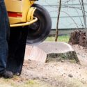 The Different Ways to Remove a Tree Stump