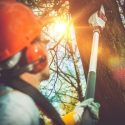 Tips for Selecting the Right Tree Removal Company