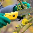 A Tree Care Checklist for the Fall