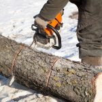 Tree Care in Winter