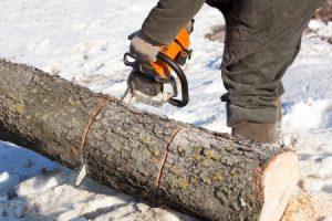 Tree Care in Winter