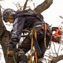 What Can You Expect From a Professional Tree Consultation?