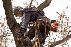 Tree Consultations