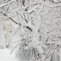 Will Ice Damage My Trees?