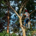 Why Spring is an Ideal Time to Call in a Tree Care Professional