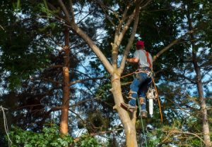 Tree Care Services in Spring