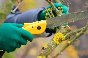 Fall Tree Care Tips