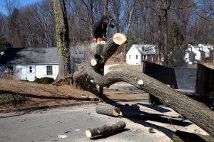 Man Cutting Down a Tree